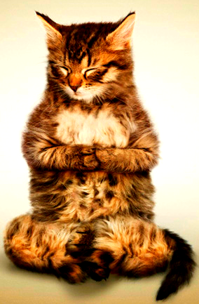 La palabra de pecado es Restriccion, dice mi gato