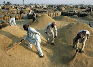 Dubai importers bought Indian wheat in tender