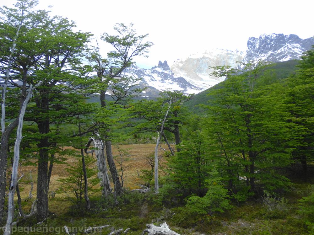 Valle río Los Perros: Mallin y Cerro Cabeza de Indio