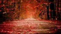 Autumn Dream DreamScene