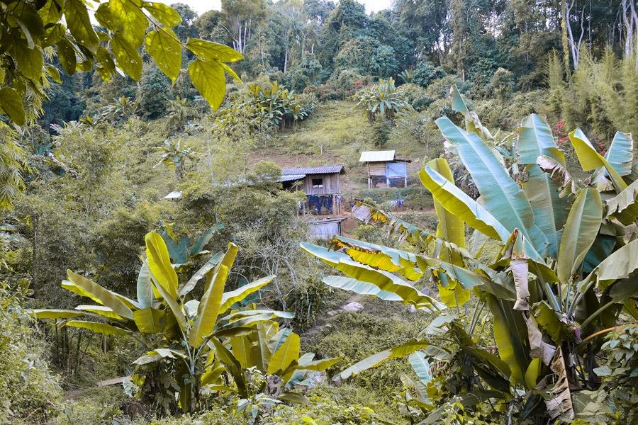 trekking w tajlandii, trekking w chiang mai