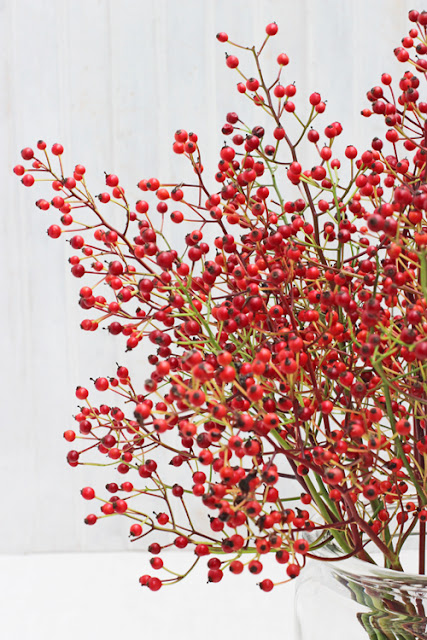 Small red rose hips