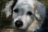 KENZO ... En magisk mirakelhund