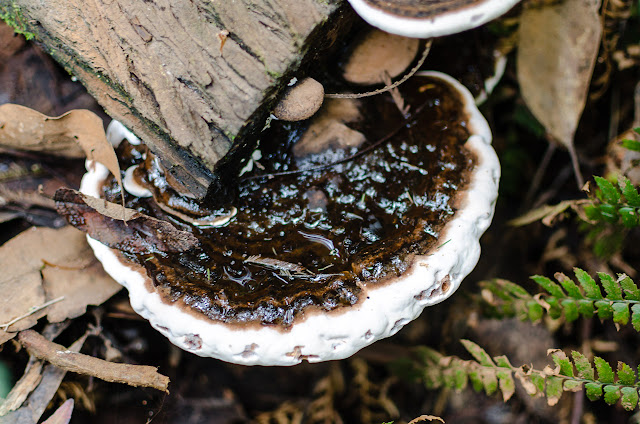 fungi on a log