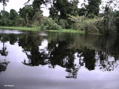 black water river, Amazon Basin