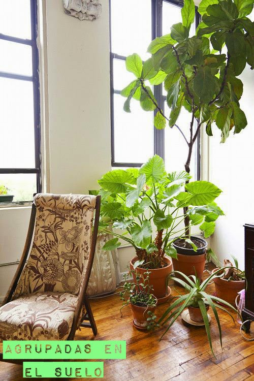 en estado de rachel: plantas en macetas de barro.