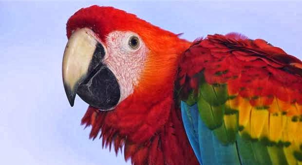 10 Jenis Burung Terindah di Dunia