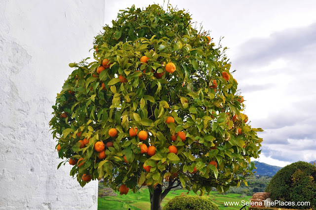 Orange Tree Mondragón Palace Ronda Spain