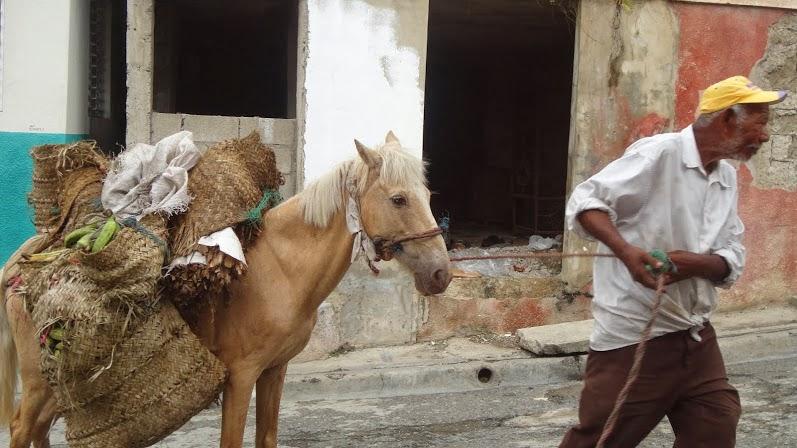 Toda una vida delante de un caballo