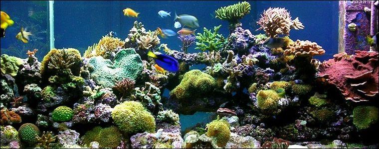 Aquarium Air Tawar Pesona Dan Keindahan Blog Akvodecor