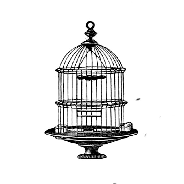 Antique bird cage drawing - photo#5