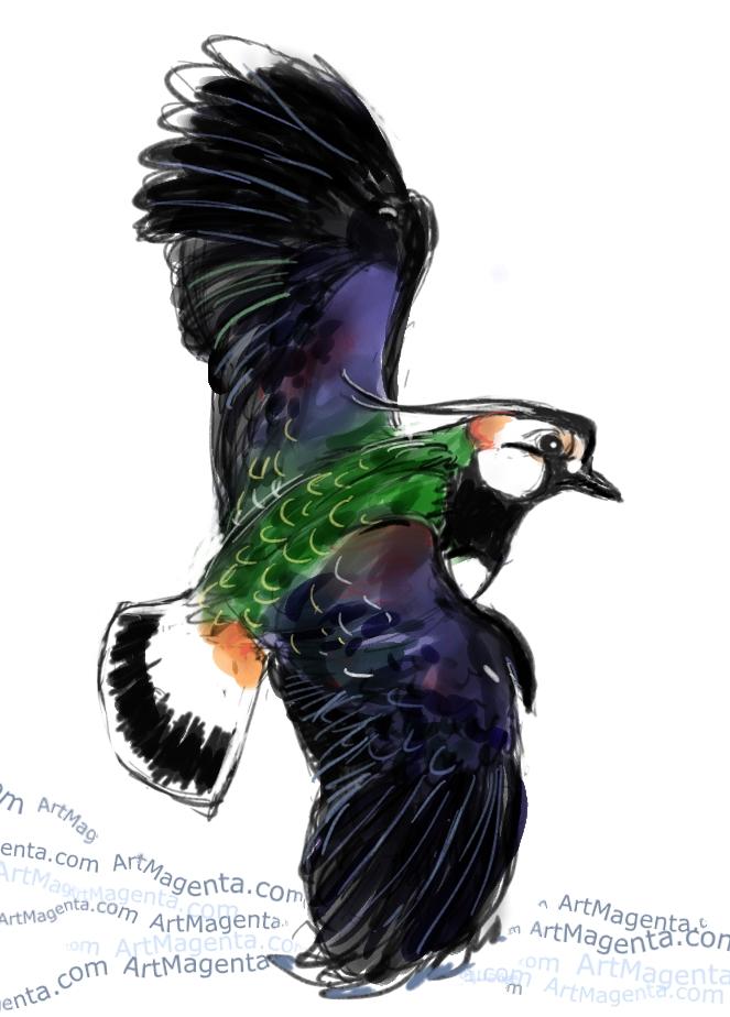 En fågelmålning av en tofsvipa från Artmagentas svenska galleri om fåglar