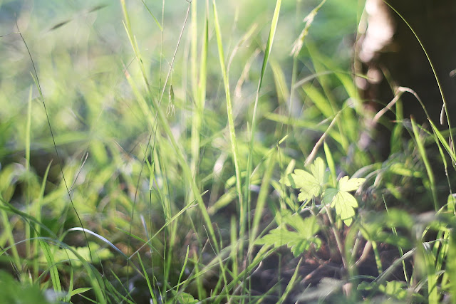 grass in light