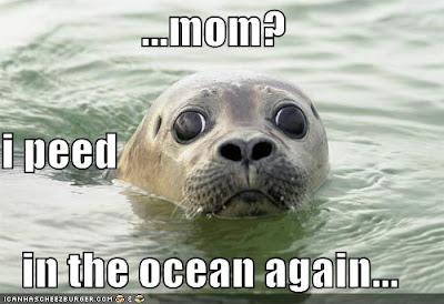 Seal's pee
