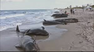 whale beach scam