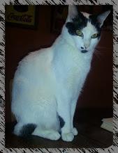 Merlín, el gato