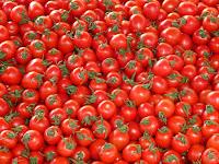 Πώς αποθηκεύουμε τις ντομάτες για μεγάλο χρονικό διάστημα χωρίς ψυγείο