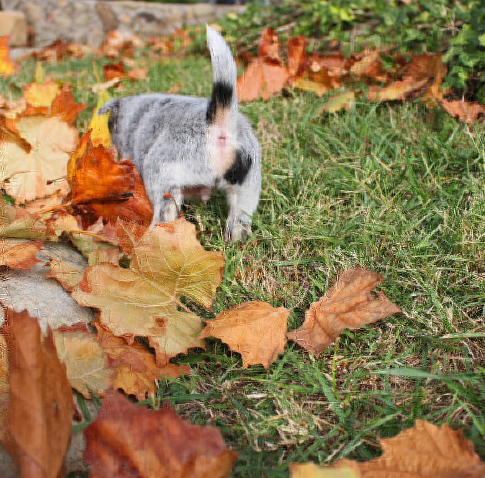 Queensland Heeler Rescue California | Dog Breeds Picture
