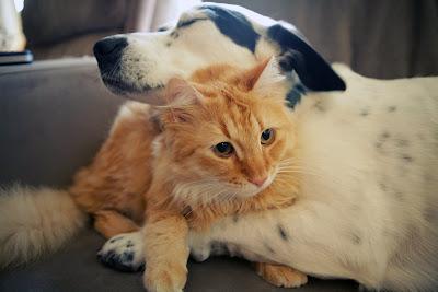 Amor y Amistad en los Animales