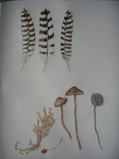 feathers and toadstools