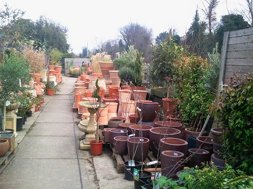 Stock up at Dulwich Pot and Plant Garden