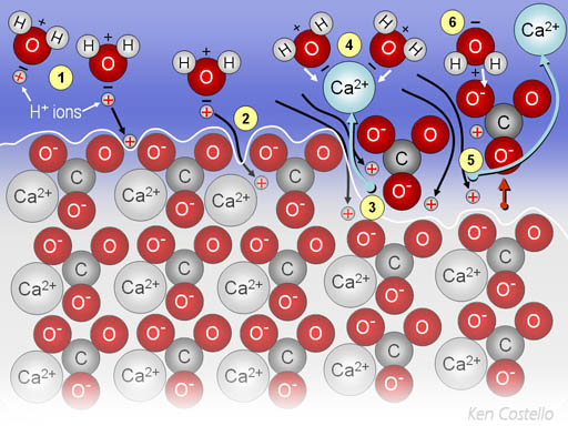 diary of a water molecule In a water molecule, the positive and negative charges are attracted to each other, which make the molecules stick together water is also considered a universal solvent, or a substance that can dissolve other substances, which is affected by its polarity.
