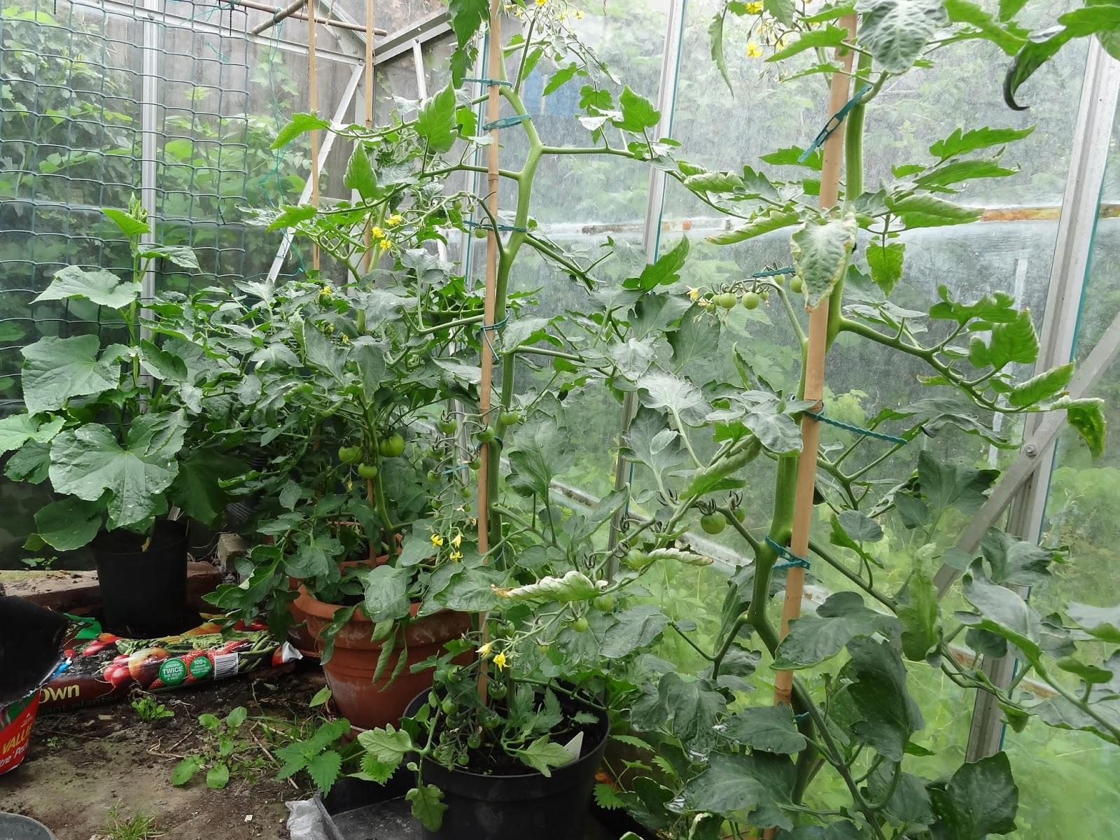 Gardeners Voice » Blog Archive » Summer Solstice Allotment