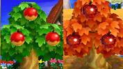 [Guía] Las frutas Manzanas