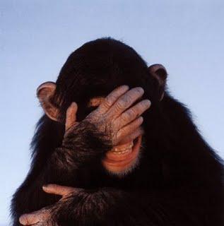 malu,rasa malu,monyet malu