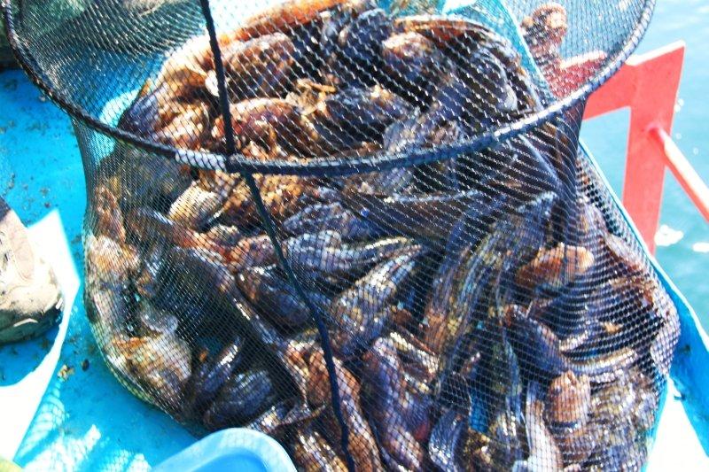 морская рыбалка в затоке на банке