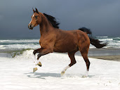 #2 Horse Wallpaper