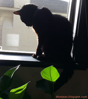 Black cat in sunny window with plant