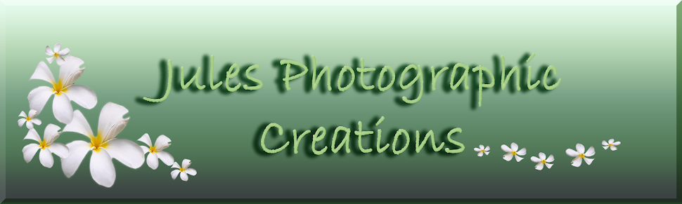 Julie Napier Photographic Creations Home Page