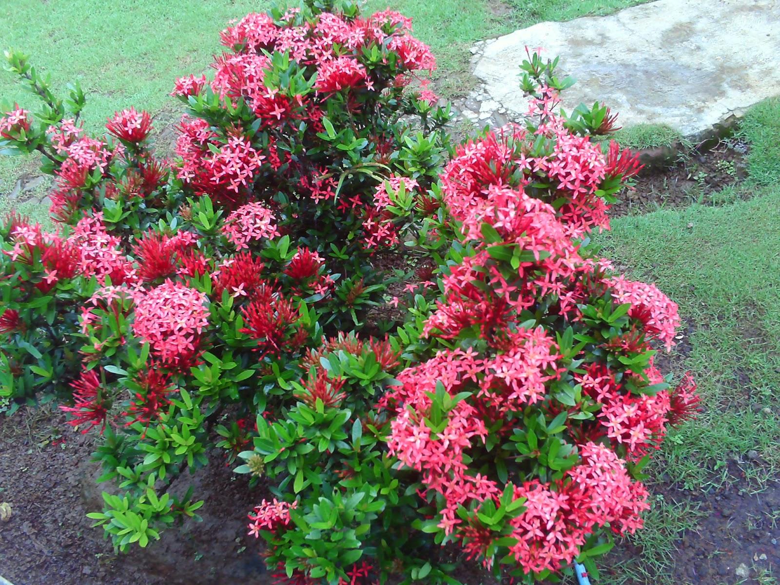 8 jenis tanaman hias bunga yang indah dan mudah perawatannya satu jam asoka ccuart Choice Image