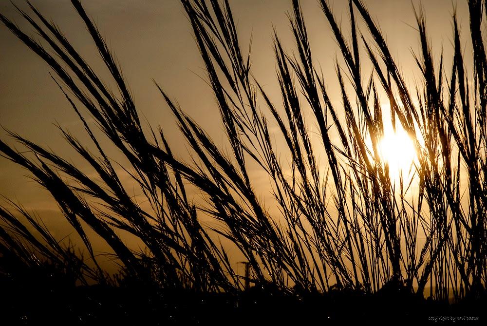 atardecer, amanecer, alicante, contraluz, fotografia, xavi pastor