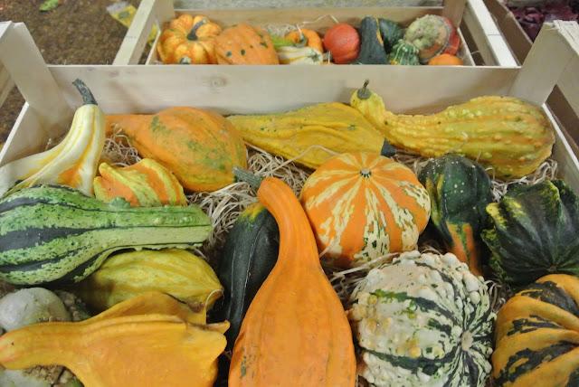Munchkin Pumpkins New Covent Garden Flower Market
