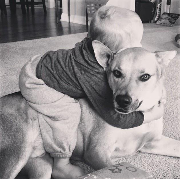 Rescue-dogs-2