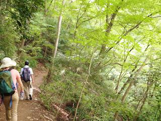 高尾山の自然道
