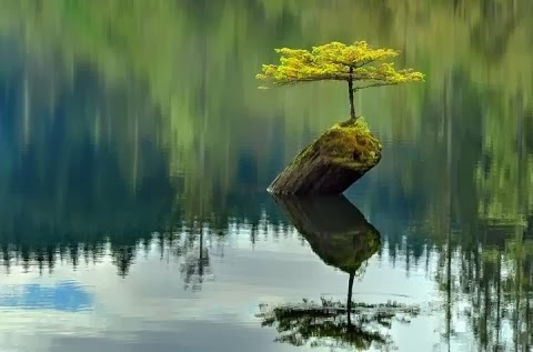Lake Water Green Tree Beautiful Cool Nature HD Images Wallpapers Free Downloads