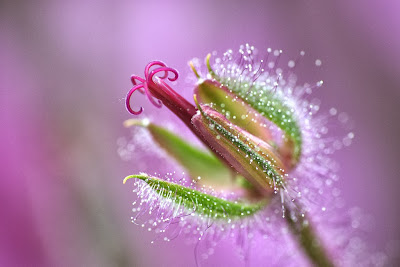 best flower images