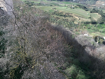 Almond trees starting bloom in the tajo del Ronda