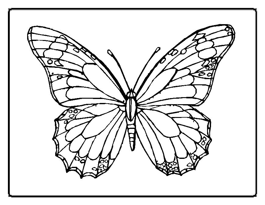 Fabulous image with butterfly printable coloring pages