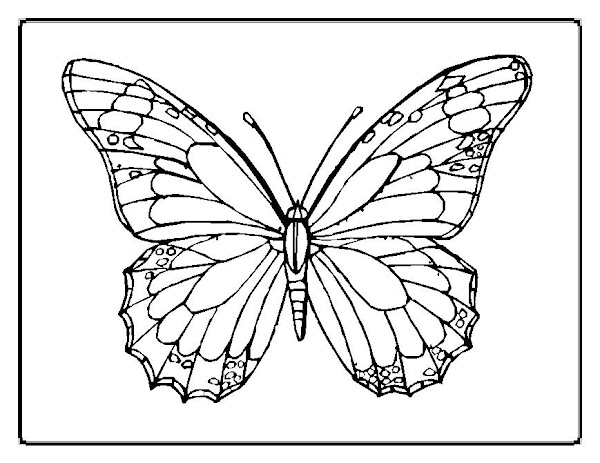 Free Butterfly Coloring Pages For Preschoolers