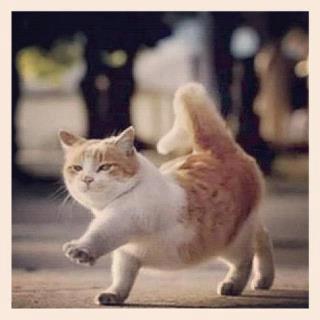 Foto Kucing Lucu Imut dan Menggemaskan 27