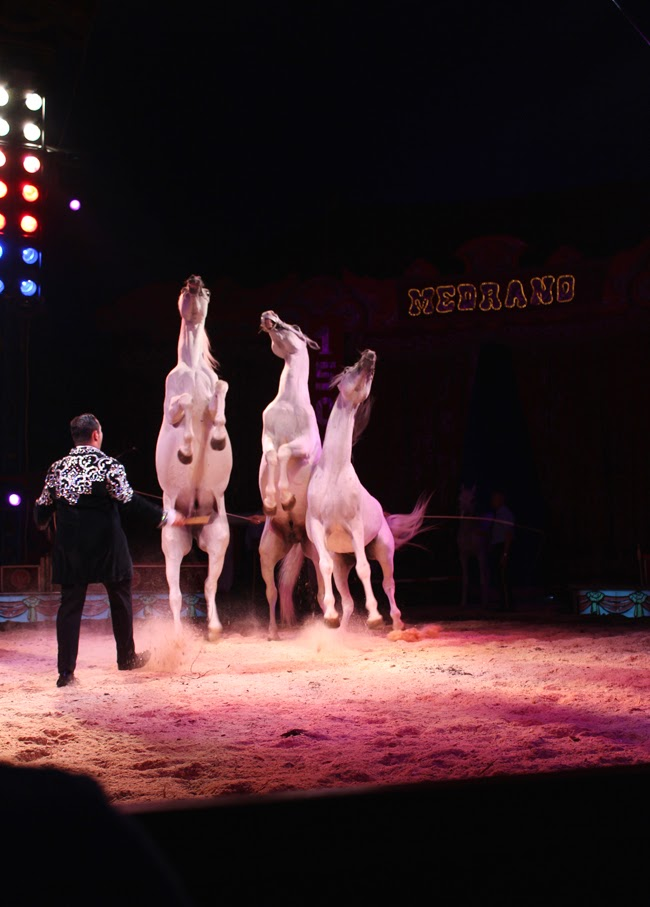 animal world, circus, horses, medrano