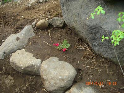 那須別荘の花壇