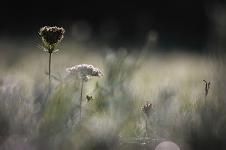 Weeds in bokeh