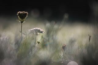 Weeds in bokeh