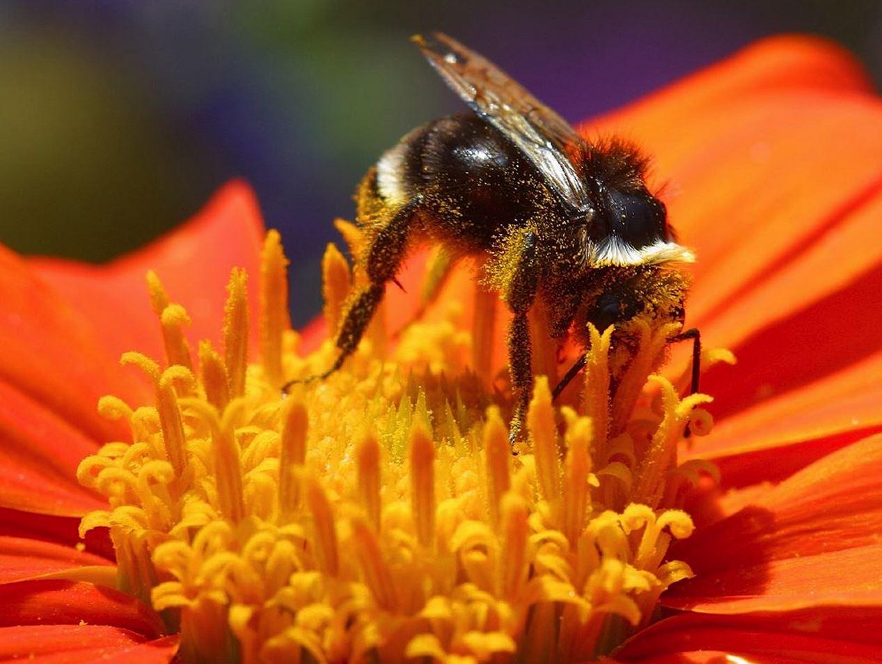 motelli isovalkeinen kukka ja mehiläinen