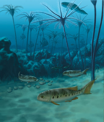 Tracking the rapid evolutionary rise of ray-finned fish